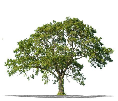 tree pic tree removal arbormax tree service