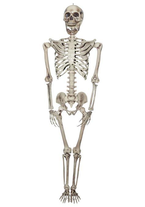 a skeleton skeleton