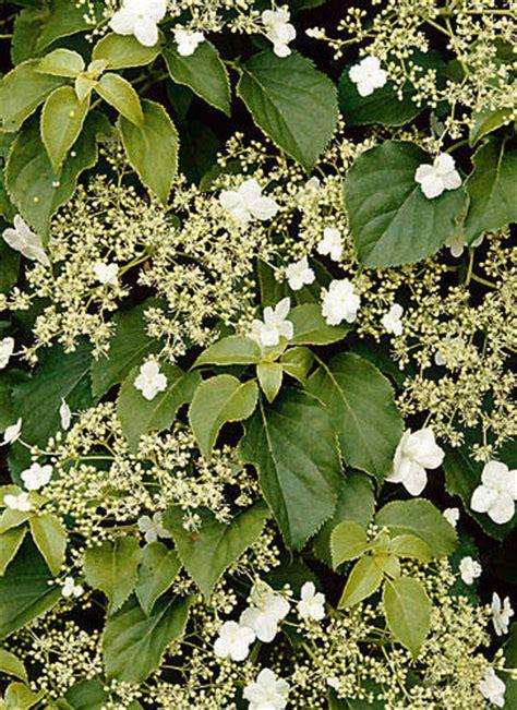 Der Duftende Garten Stellung by F 252 R Balkon Und Garten Wei 223 E Blumen Und Pflanzen Brigitte De