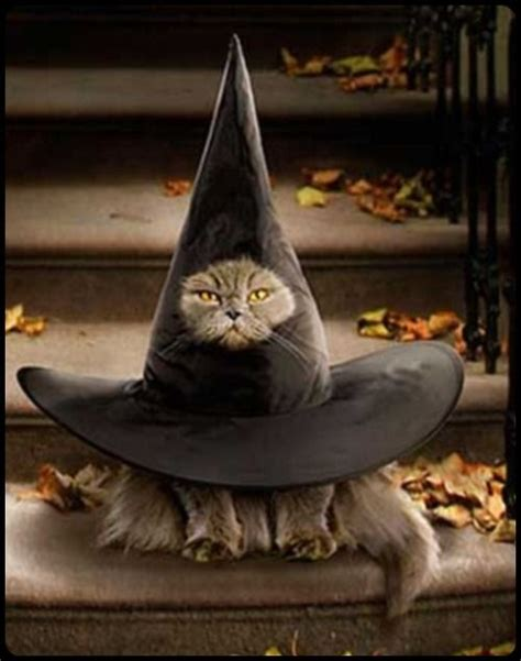 witches cat 28 costumes for cats that will put a smile on