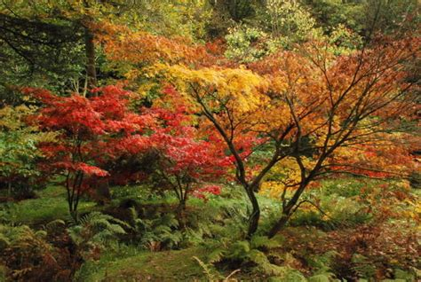 maple tree when to plant types of maple trees best trees to plant