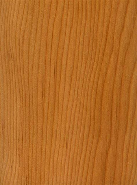 pacific woodworking pacific yew the wood database lumber identification