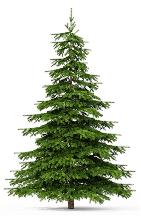 www christmastrees real trees in camberley mr emments