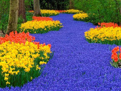 netherlands flower garden keukenhof weiner elementary