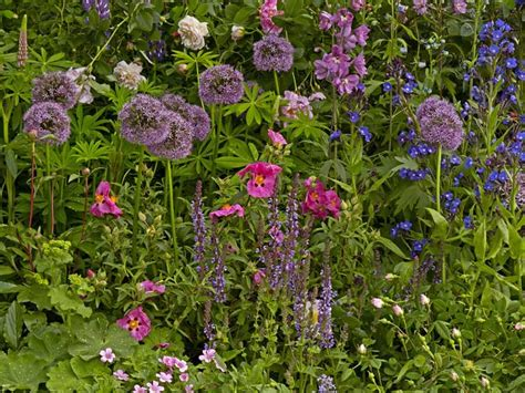 small cottage garden design ideas cottage garden design plants structure proximity saga