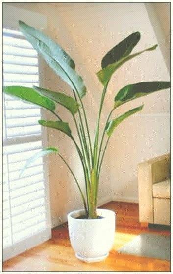 mejores plantas de interior las mejores plantas de interior grandes buenas grandes