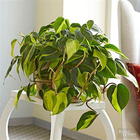 Plants Low Light indoor plants for low light