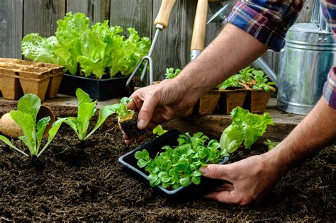 garden vegetable your guide to starting a vegetable garden