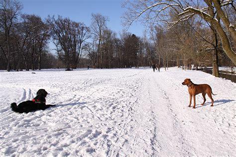 Englischer Garten München Leinenpflicht by Hundewiesen In Und Um M 252 Nchen K 246 Rbchen 174