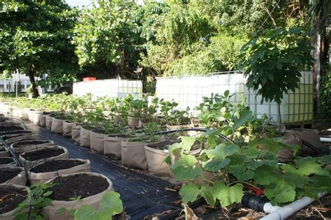 city of fort lauderdale fl vegetable gardening in south