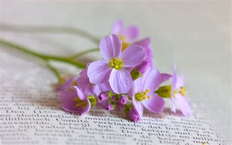 flower picture book come sit by the hearth still with book and