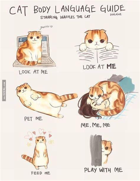 cat painting guide cat language guide meow aum