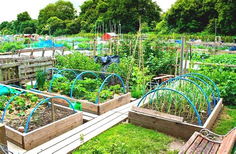 the vegetable garden image gallery large vegetable garden design