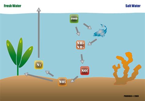 aquarium eau douce cycle