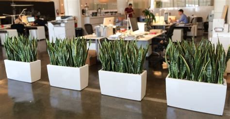 plants for the office benefits indoor plants to your office green and