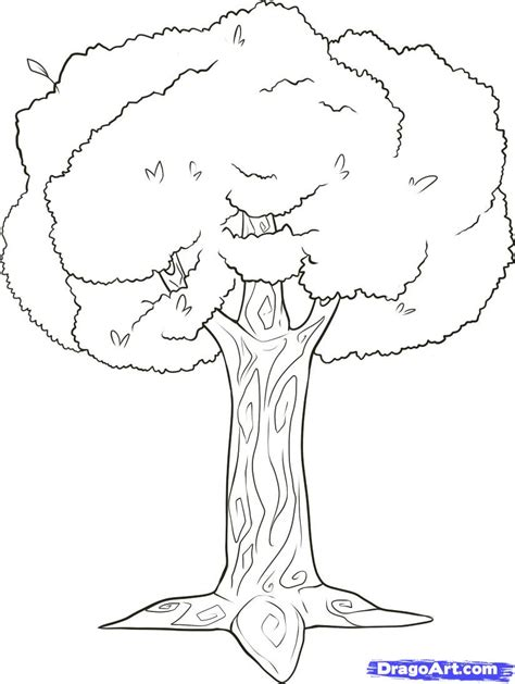 how to draw tree pictures how to draw branches step by step trees pop culture