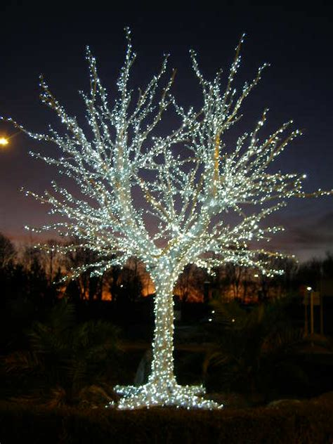 trees made of lights made tree of lights entrance to 169 brian green cc