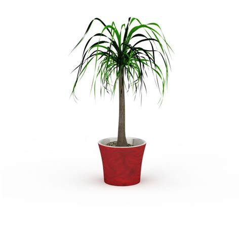 small potted trees small potted tree 3d model 3ds max files free