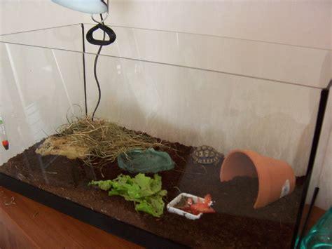 terrarium pour tortue de terre trouvez le meilleur prix sur voir avant d acheter
