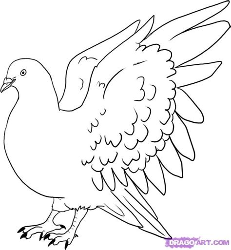 how to drow how to draw a pigeon step by step birds animals free