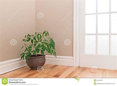 Corner Of A Room green plant decorating a room corner stock image image