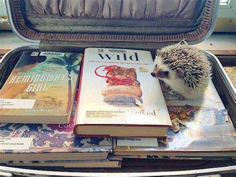 instagram picture book bookish hedgehogs of instagram
