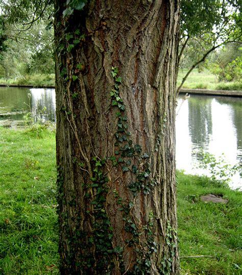 tree pic tree trunk flickr photo