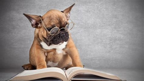 picture books about dogs adorable pictures of dogs reading books n