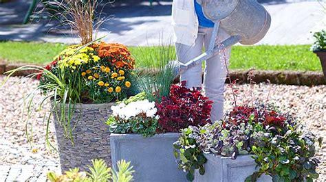 Blumenkübel Bepflanzen Vorschläge by Stauden In K 252 Bel Pflanzen Oase Auf Balkon Und Terrasse