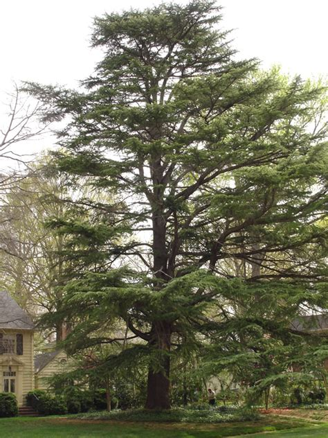 trees nc tree services in tree stump removal costs etc