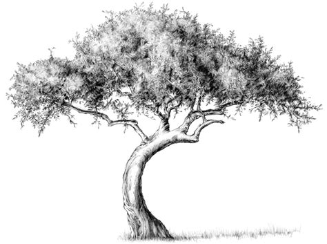tree drawing drawing lesson tree the scribbles institute