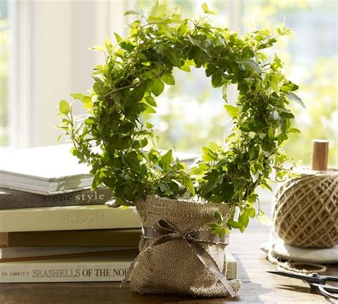 traditional plants live topiary traditional plants by pottery barn