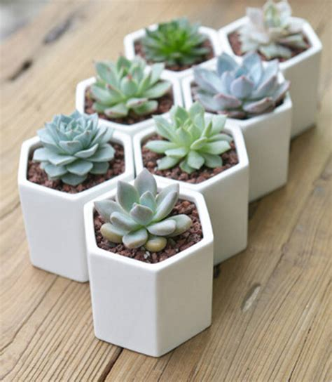 cactus planters hexagon mini planter choice of succulent or cacti by