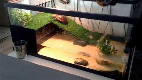 plongeon de tortue d eau