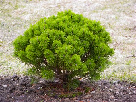 bushes and trees images of trees in landscape design transplanting of