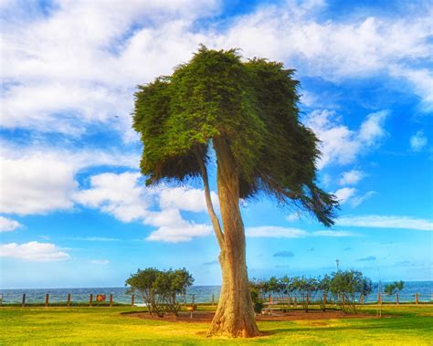 dr suess tree frankie foto 187 15 best spots to photograph san diego