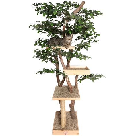 tree for cats sycamore real cat tree nipandbones