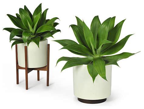 modern indoor planters bistro chaise lounge fermob modern indoor