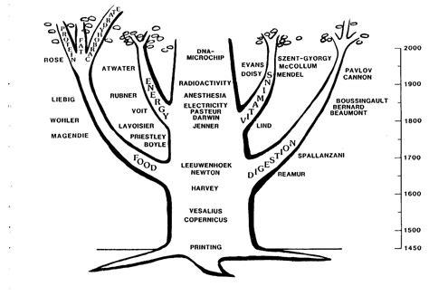 Garten Baum Der Erkenntnis by Erkenntnisbaum
