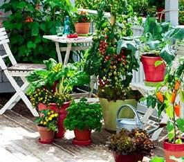 kitchen garden vegetables how to start a balcony kitchen garden complete guide