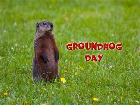 groundhog day free free groundhog day computer desktop wallpaper