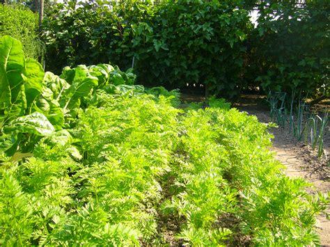 vegetable gardens organic vegetable gardens vegetable garden guide