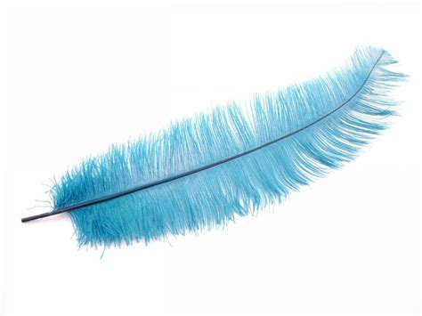 feather with ostrich feathers dyed ostrich wing feathers for costumes