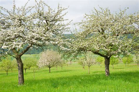 tree spray best time for spraying trees when to spray fruit trees