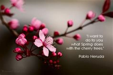 1000 images about cherry blossoms on cherry blossom cherry blossoms and blossoms