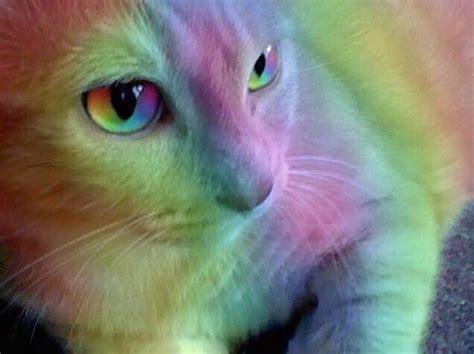 rainbow cat painting rainbow cat on