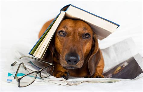 picture books about dogs the best books about dogs barnes noble reads barnes