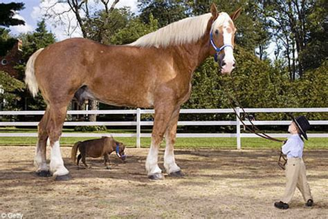 how many pony in a pound equine sublime or equine ink