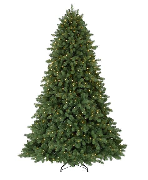 noble fir tree pictures classic noble fir tree tree classics