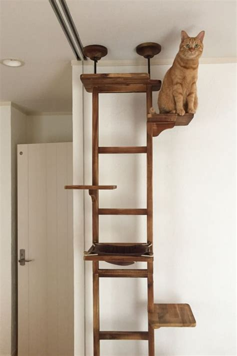 tree for cats 1000 ideas about cat trees on image cat cat